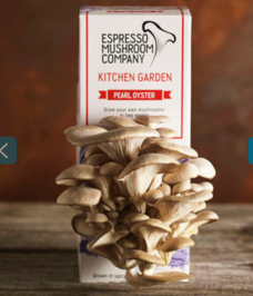 https://www.notonthehighstreet.com/espressomushroomcompany/product/kitchen-garden-mushroom-grow-kit